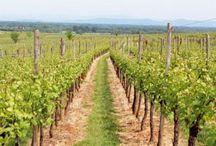 Le sentier des Grands Crus, vue imprenable sur le vignoble alsacien / Quand la Route des Vins commence à être embouteillée avec l'afflux de touristes, pourquoi ne pas couper à travers champs ? A pied ou à vélo, le sentier des Grands Crus, une boucle de 17 km, permet de profiter du paysage en toute tranquillité, avec une vue imprenable sur le vignoble, et la traversée de villages typiques.