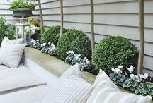 - Our Garden -