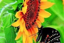 Butterfly garden / by Debbie Varelas