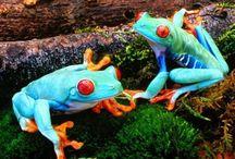 Frogs & lizards