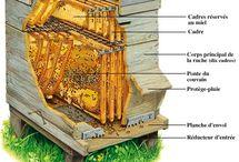 les abeilles et leurs ruches