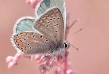 Kelebek / Kelebekler