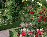 Roses/Rozen