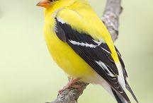 Volière vogels verlanglijst