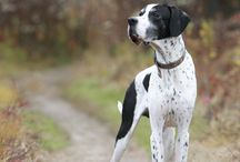 great dane / by Lisa Campbell