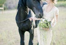 horse / by Elizabeth Bo Yeong