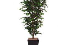 Artificial Ficus Trees