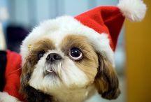 Karácsonyi cukiság / Mindenki szívét meglágyítja egy kis cukiság :)
