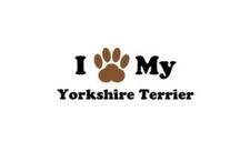Yorkie love <3 / Proud yorkie owner fan page
