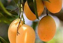 Frutas sabrosas