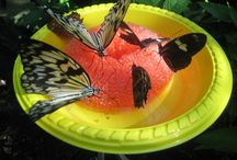 Butterfly and Moth Feeders to Make / How to make a butterfly or moth feeder / by Roberta Gibson