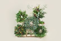 Wreaths / Wreaths make the perfect adornment for any front door and can be created all year round. They should not just be limited to the festive season.