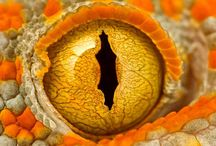 Science: Microscope