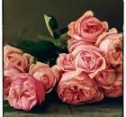 Roses / by Jenny Stern