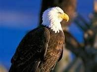 Eagles / by Wendy Fennell