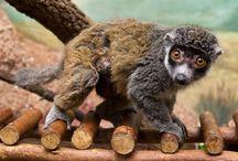 Primates / by Bonnie Hogue