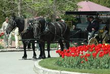 Travel Tips / Travel tips for planning your stay on Mackinac Island.