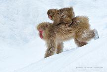 Animal Humour / Animals at play and adopting human-like behaviour