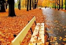 paisagens outono