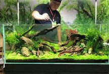 Nature Aquarium Aquascaping
