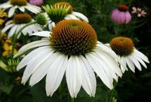 Garden favs / by Josephine Gielen