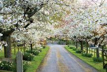 Tree driveways