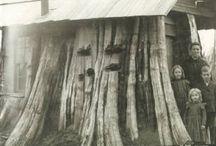 Stump Houses of Washington State