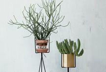 _DESIGNSETTER_PLANTS