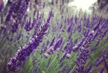 LARRY LITTLEWOOD / Larry Littlewood invites us to his white sage & lavender farm where we learn about his deep love for farming and even how to tie our own sage bundles! Keep your eyes out for these precious organic items in our store!