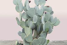 plants laksamana