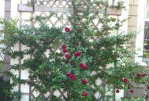 Garden Perennials / Gardens with English roses, perennials. Designing with color, form and sculpture in the garden