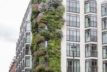 Vertical green - facade