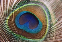 Turquoise / Peacock / by Sandy Braddy