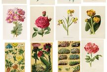 Botanica, illustrated / by Chui-Ting Lee