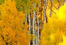 Colours- Yellow- Sárga