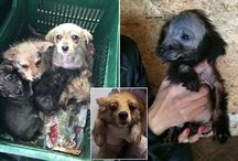 stop cruelty NOW!!!!!!!!!!!!!