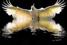 Kuş ve deniz