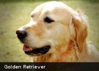 Consejos para mascotas / Consejos que nos ayudan a dar una mejor vida para nuestras mascotas.