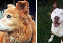 Les plus beaux croisements de races de chiens