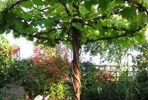 Cosas que me encantan de jardinería / gardening