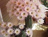 flores e cactos