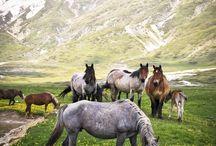 ❤{horses}