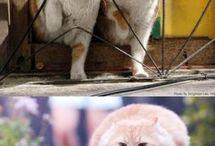 Funny animals / by Erika Pfeuffer