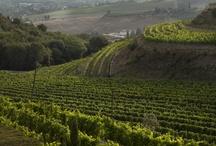 Landscapes / Tuscany, Land of Enchantment