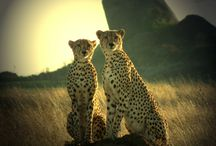 Tanzania / Exploring the wonders of the African nation of Tanzania on the east coast of Africa.