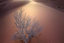 Magnificent Landscape / by Thierry Joli