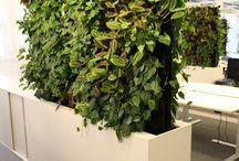 Mobilne zielone ściany / Przykłady zastosowania mobilnych zielonych ścian