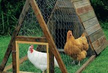 Chicken Coops & Aviaries / At CheapSheds we love our Chooks (Chickens) and Birds and so do our Customers.