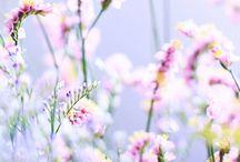 Jemnost květinové říše - fineness floral empire