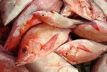 Manfaat Ikan Konsumsi untuk Kesehatan Tubuh